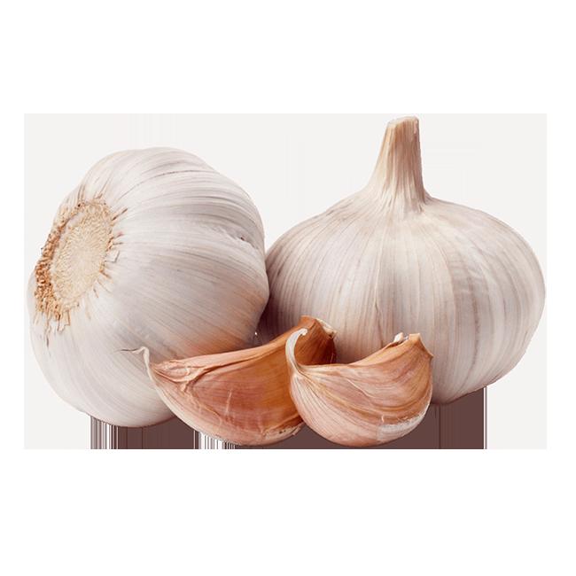 ajo-garlic